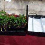 Das Leucht-Anzuchthaus vom Gärtner Pötschke zerlegt in die beiden Teile: links die Schale mit den Pflanzen und den Justierelementen, rechts der Deckel mit den beiden Leuchtstoff-Röhren