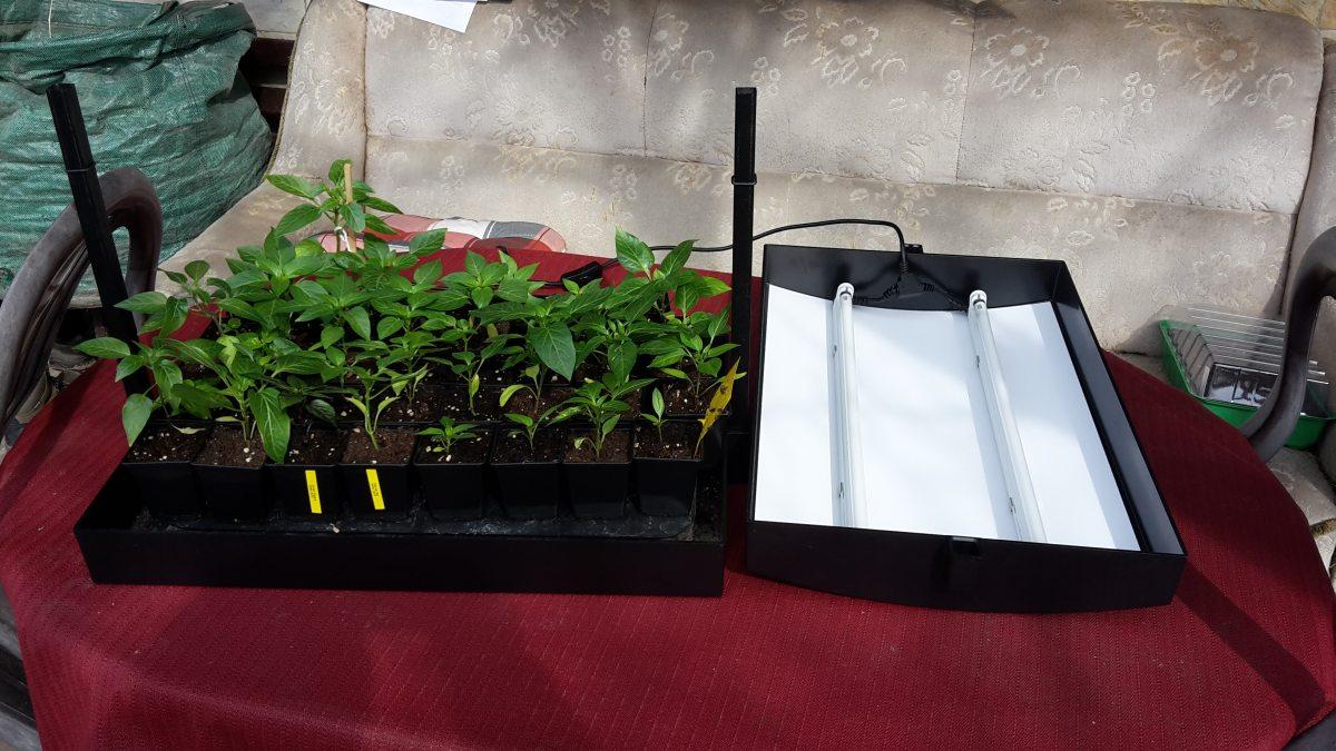 pflanzen vorziehen unter kunstlicht so gelingt jede vorzuchtder selbstversorger. Black Bedroom Furniture Sets. Home Design Ideas