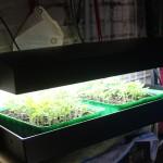 Der Lichtkasten in Betrieb, die Leuchtstoffröhren zur Vorzucht der Pflanzen leuchten.