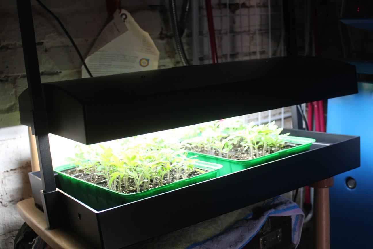 pflanzen vorziehen unter kunstlicht so gelingt jede. Black Bedroom Furniture Sets. Home Design Ideas