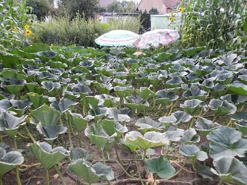 Eine Pflanze braucht unter Umständen sehr viel Platz. (c) Peter Ganter